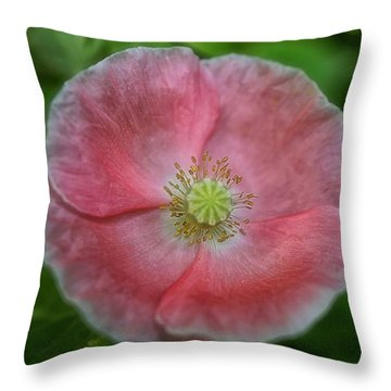 Delicate In Pink Throw Pillow