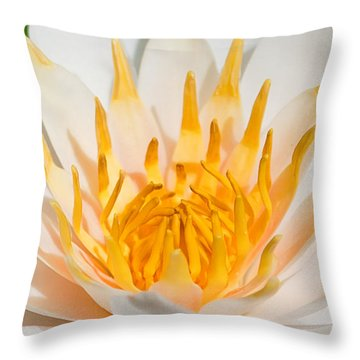 Delicate Touch Throw Pillow