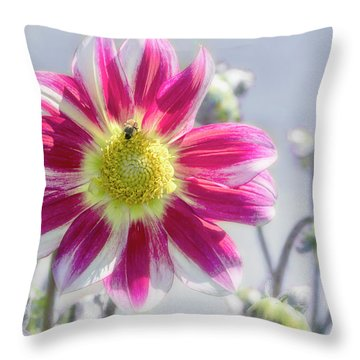 Throw Pillow featuring the photograph Delicious Dahlia by Belinda Greb