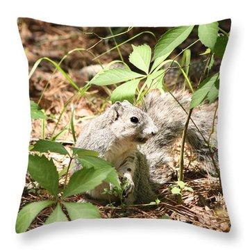 Delmarva Fox Squirrel - Local Rock Star Throw Pillow