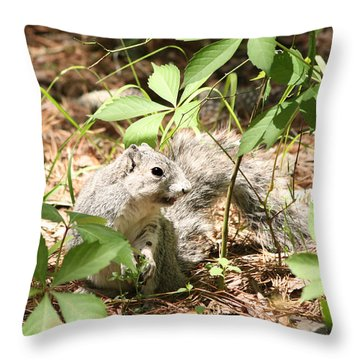 Delmarva Fox Squirrel - Local Rock Star Throw Pillow