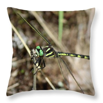 Delta-spotted Spiketail  Male Throw Pillow