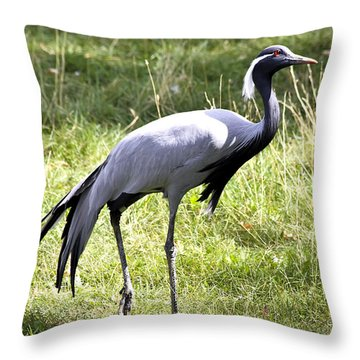 Demoiselle Crane Throw Pillow by Teresa Zieba