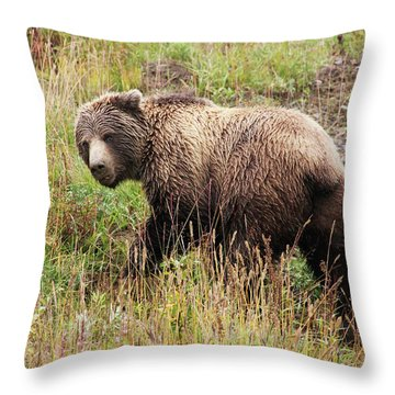 Denali Grizzly Throw Pillow