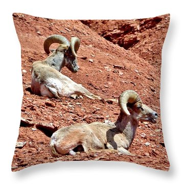 Desert Big Horn Sheep Capitol Reef National Park Utah Throw Pillow by Deborah Moen
