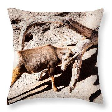 Desert Bighorn Ram Throw Pillow by Lawrence Burry