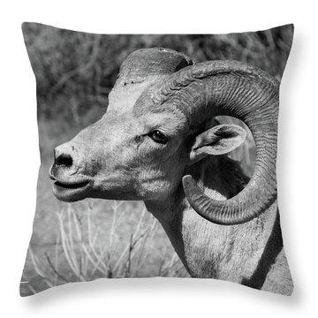 Desert Bighorn Throw Pillow