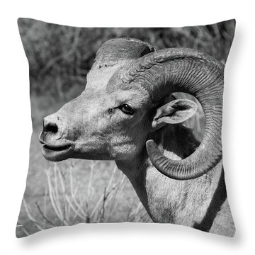 Desert Bighorn Throw Pillow