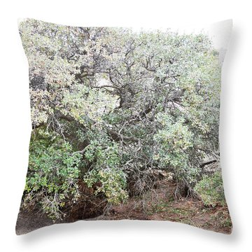 Throw Pillow featuring the photograph Desert Canyon Tree by Andrea Hazel Ihlefeld