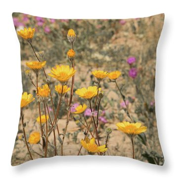 Throw Pillow featuring the photograph Desert Daisy by Michael Hope