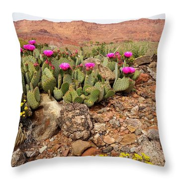 Desert Cactus In Bloom Throw Pillow