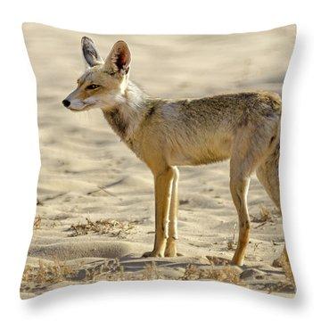 desert Fox 02 Throw Pillow