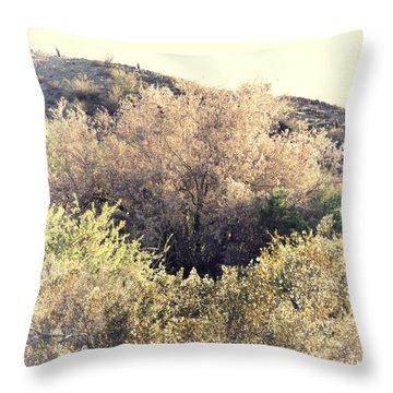 Desert Ironwood Afternoon Throw Pillow