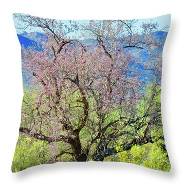 Desert Ironwood Beauty Throw Pillow