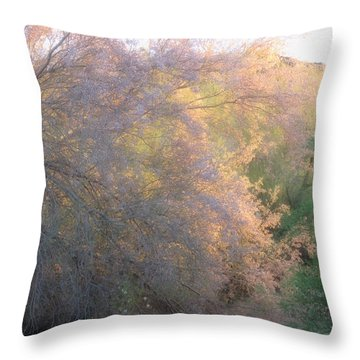 Desert Ironwood Blooming In The Golden Hour Throw Pillow