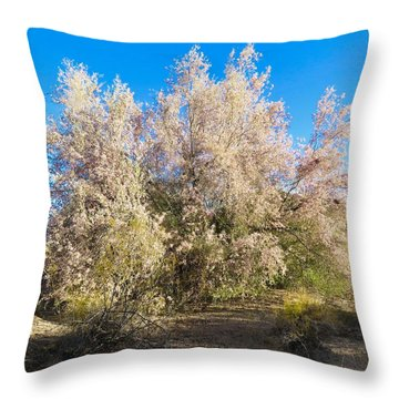 Desert Ironwood Tree In Bloom - Early Morning Throw Pillow