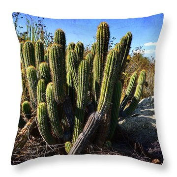 Throw Pillow featuring the photograph Desert Plants - The Wild Bunch by Glenn McCarthy
