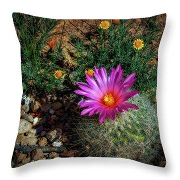 Desert Splash Throw Pillow by Elaine Malott
