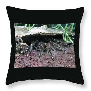 Desert Tarantula Throw Pillow