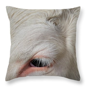 Throw Pillow featuring the photograph Detail Of The Head Of A Cow by Nick Biemans