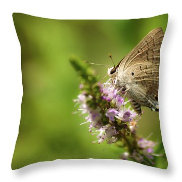 Deudorix Livia Throw Pillow
