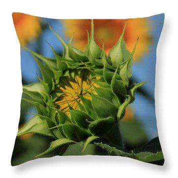 Throw Pillow featuring the photograph Developing Petals On A Sunflower by Chris Berry