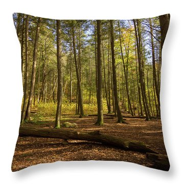 Throw Pillow featuring the photograph Devil's Hopyard Clearing by Kirkodd Photography Of New England