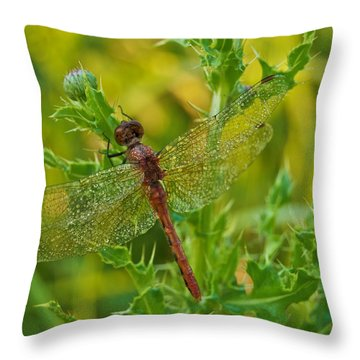 Dew Covered 5904 Throw Pillow by Michael Peychich
