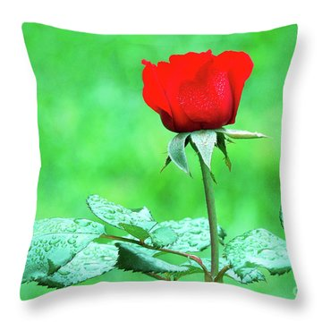Throw Pillow featuring the photograph Dew-covered Red Rose by Ram Vasudev