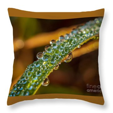 Throw Pillow featuring the photograph Dew Drop Reflection by Tom Claud