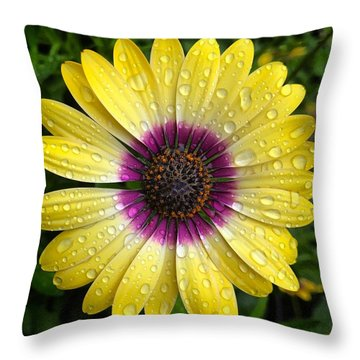 Dew Dropped Daisy Throw Pillow