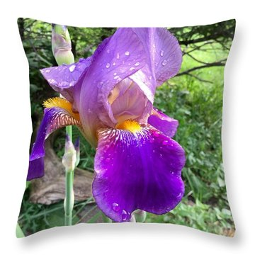 Dew Drops On The First Iris 2015 Throw Pillow by Patricia E Sundik