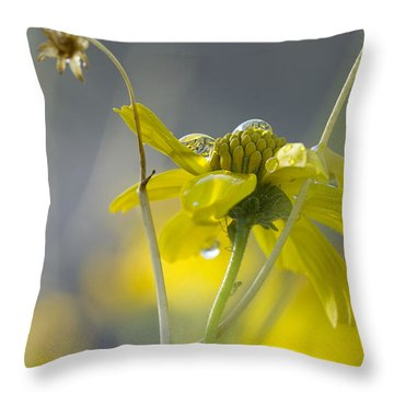 Dew On A Desert Bloom Throw Pillow by Sue Cullumber