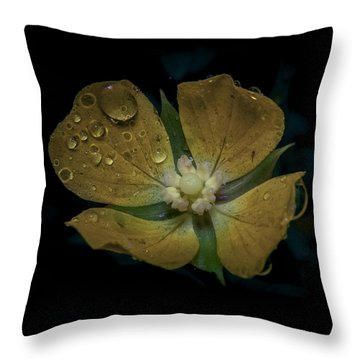 Throw Pillow featuring the photograph Dew To Drought 546 by Karen Musick