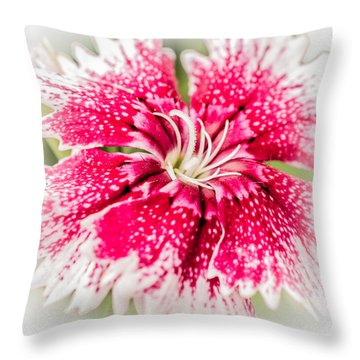 Dianthus Beauty Throw Pillow by Yeates Photography