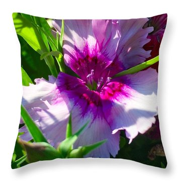 Dianthus Carnation Throw Pillow