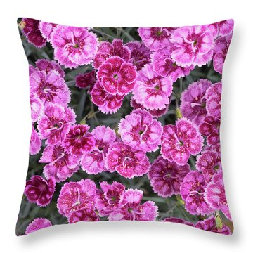 Throw Pillow featuring the photograph Dianthus Gold Fleck by Tim Gainey