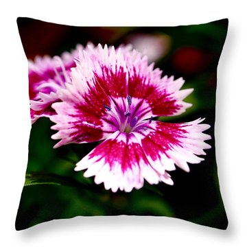Dianthus Throw Pillow by Rona Black