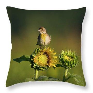 Dickcissel Sunflower Throw Pillow