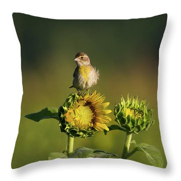 Dickcissel Sunflower Throw Pillow