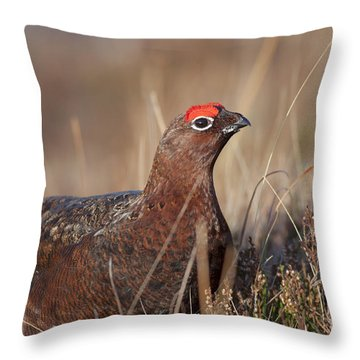 Throw Pillow featuring the photograph Did I Overdo It With The Eye Shadow? by Karen Van Der Zijden