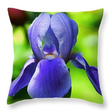 Dierker Road Iris Throw Pillow