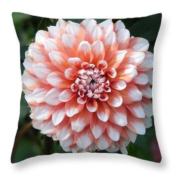 Dahlia Flower- Soft Pink Tones Throw Pillow