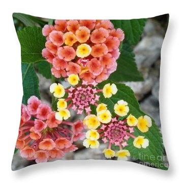 Dillards Darlings Throw Pillow