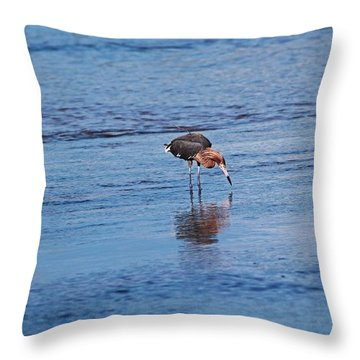 Throw Pillow featuring the photograph Ding Darling's Number One II by Michiale Schneider