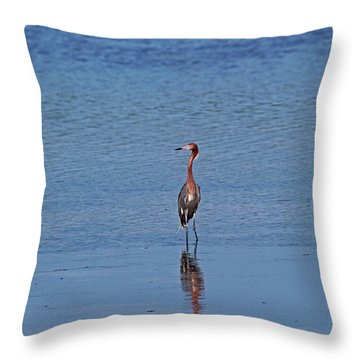 Throw Pillow featuring the photograph Ding Darling's Number One IIi by Michiale Schneider