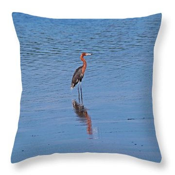 Throw Pillow featuring the photograph Ding Darling's Number One by Michiale Schneider