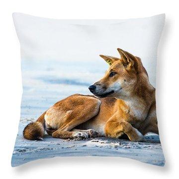 Dingo On Fraser Island Beach Throw Pillow