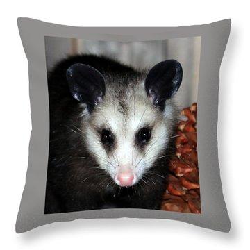 Dining Possums Vii Throw Pillow