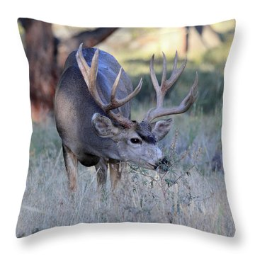 Throw Pillow featuring the photograph Dinner Time by Shane Bechler